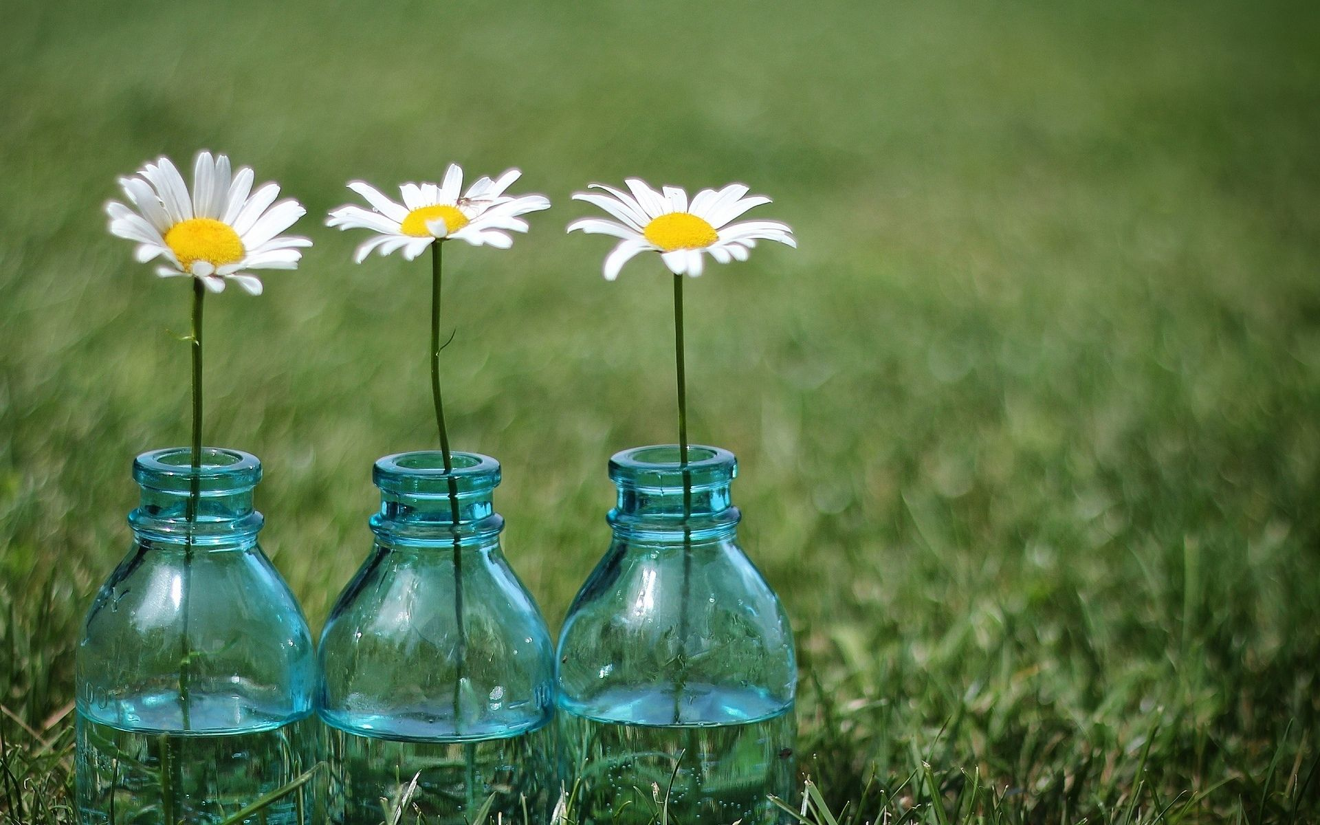 daisy background images