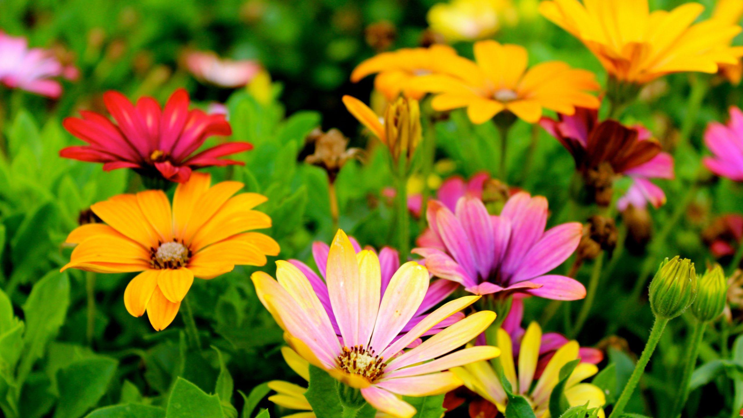 daisy photos free
