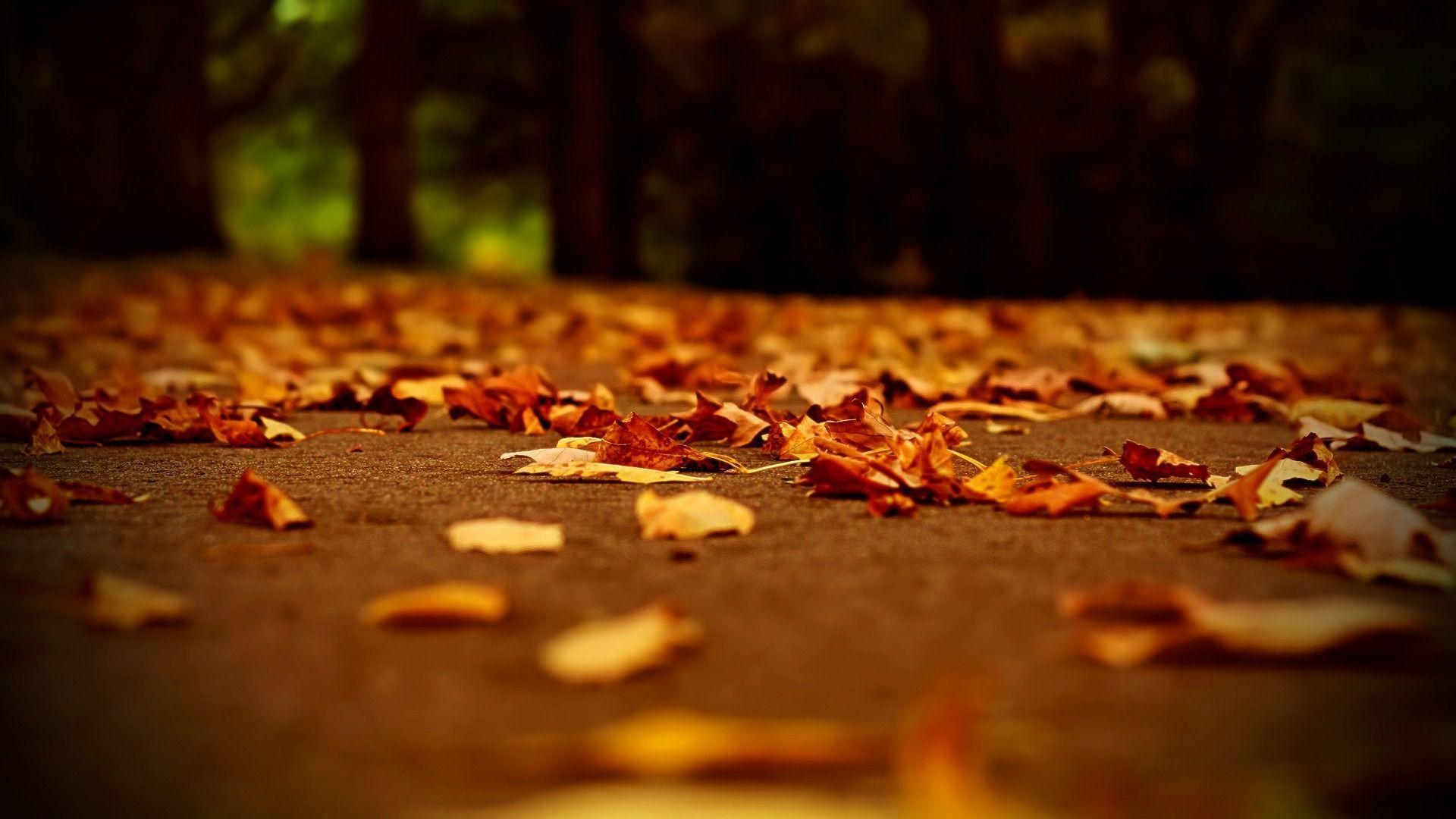 dark fall backgrounds