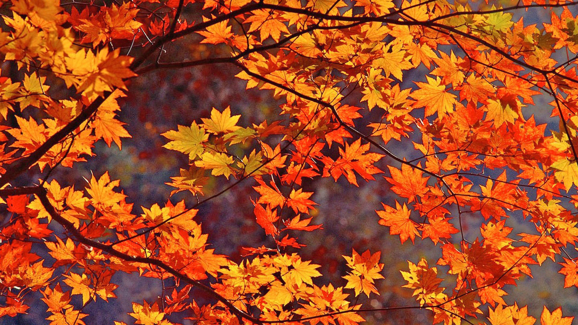 autumn wallpaper for iphone 6