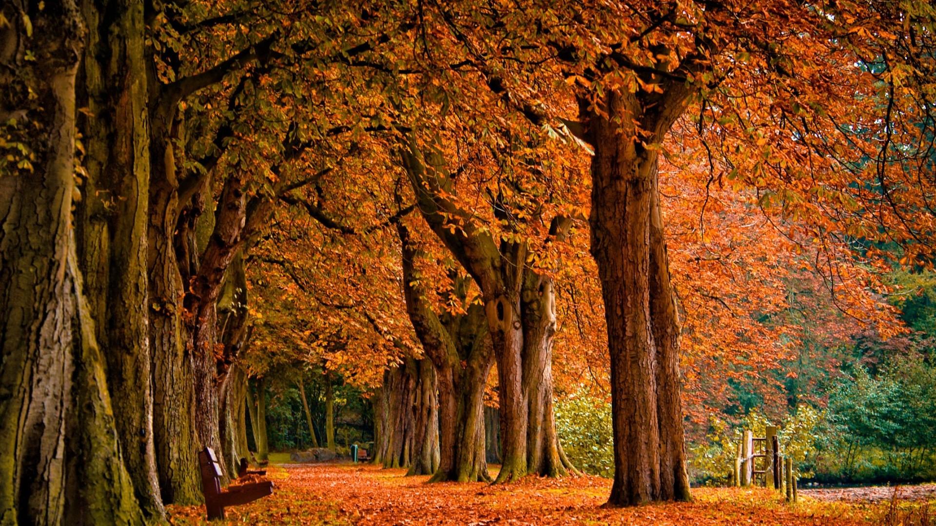 vintage fall leaves