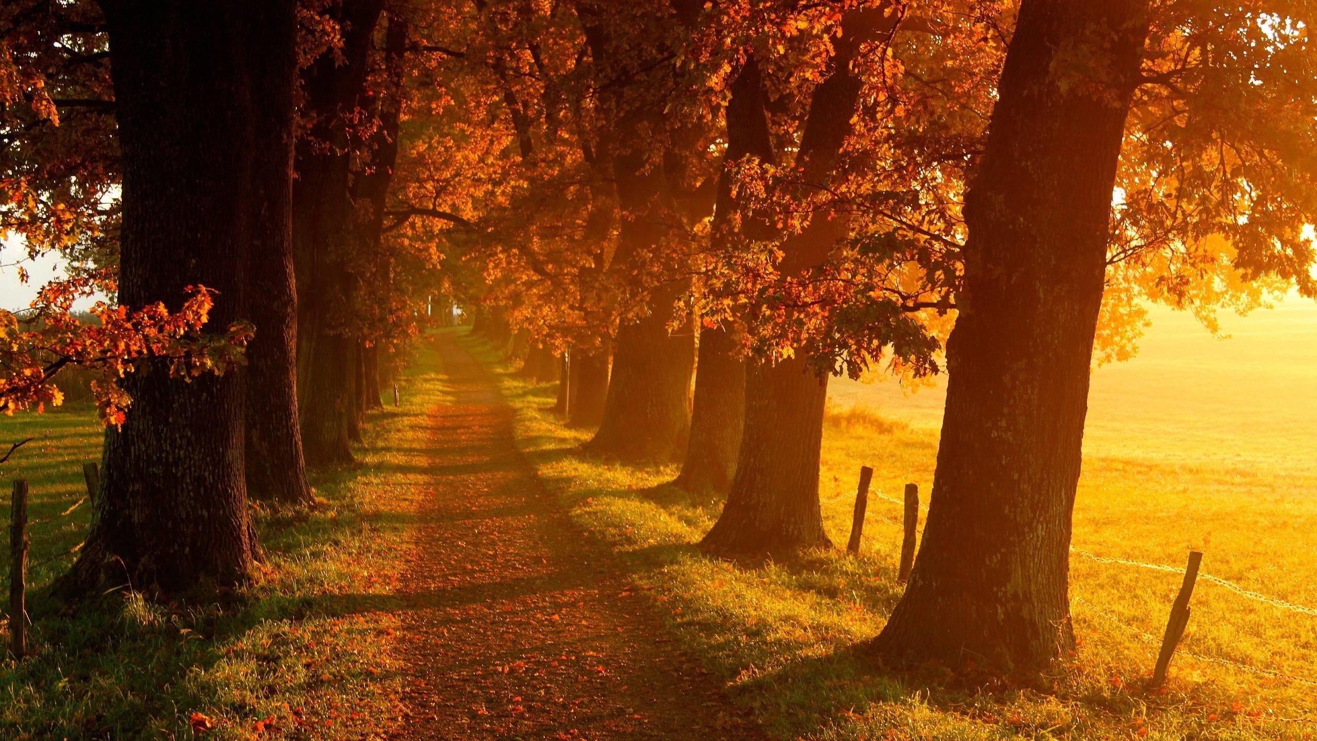 fall pattern background