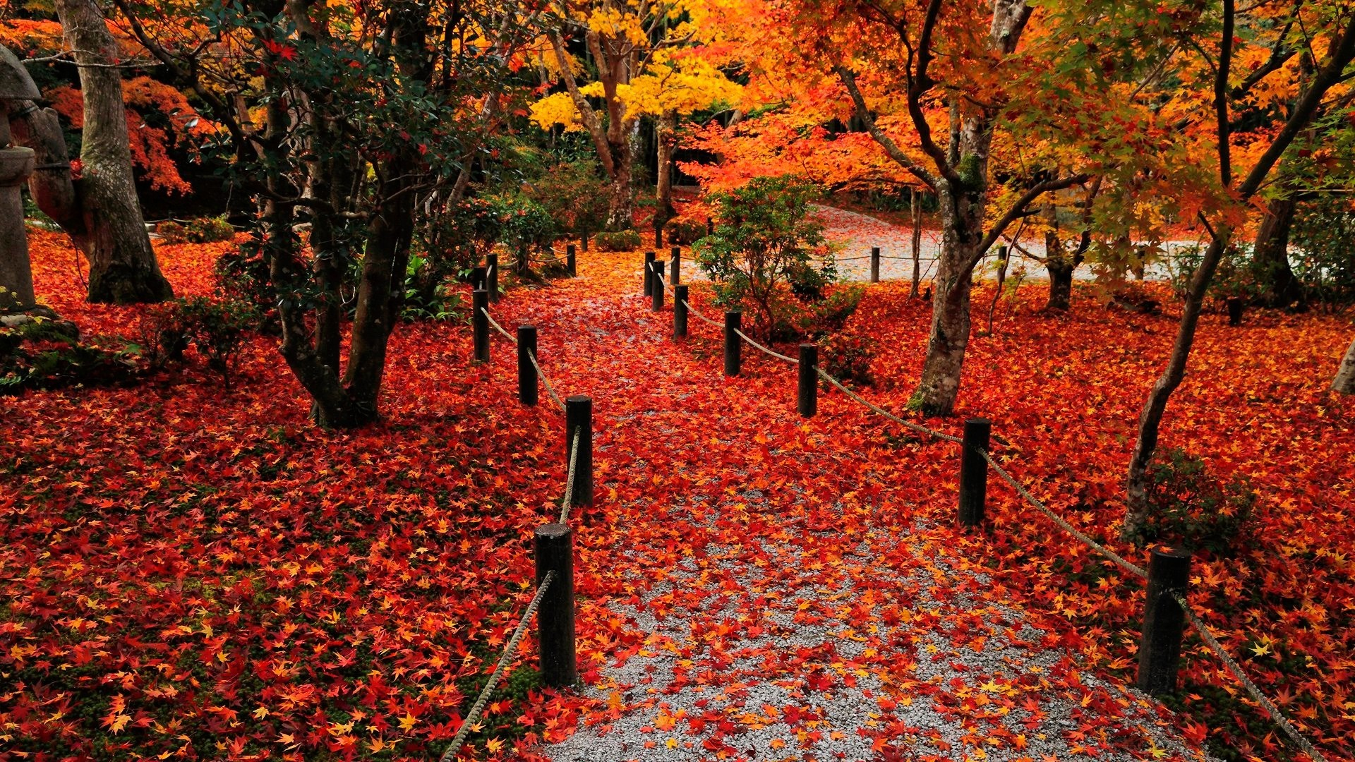 fall background images