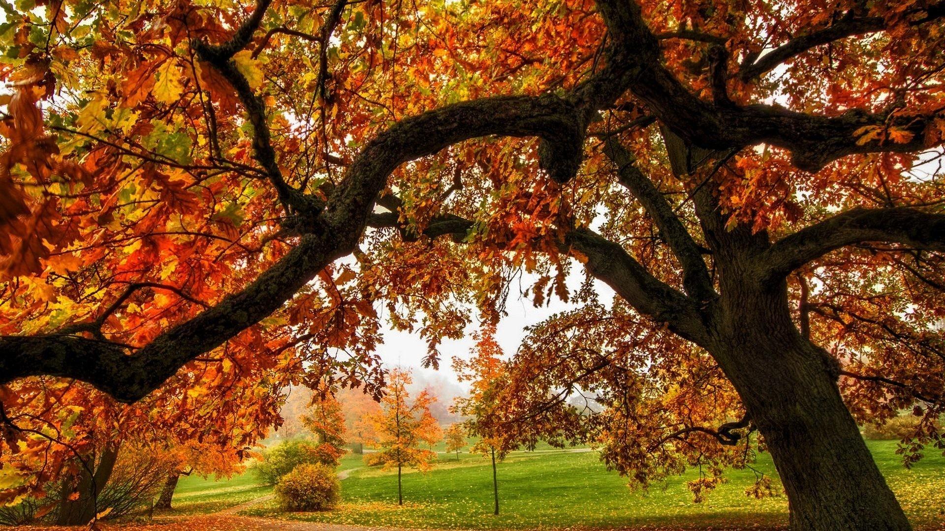 fall background image