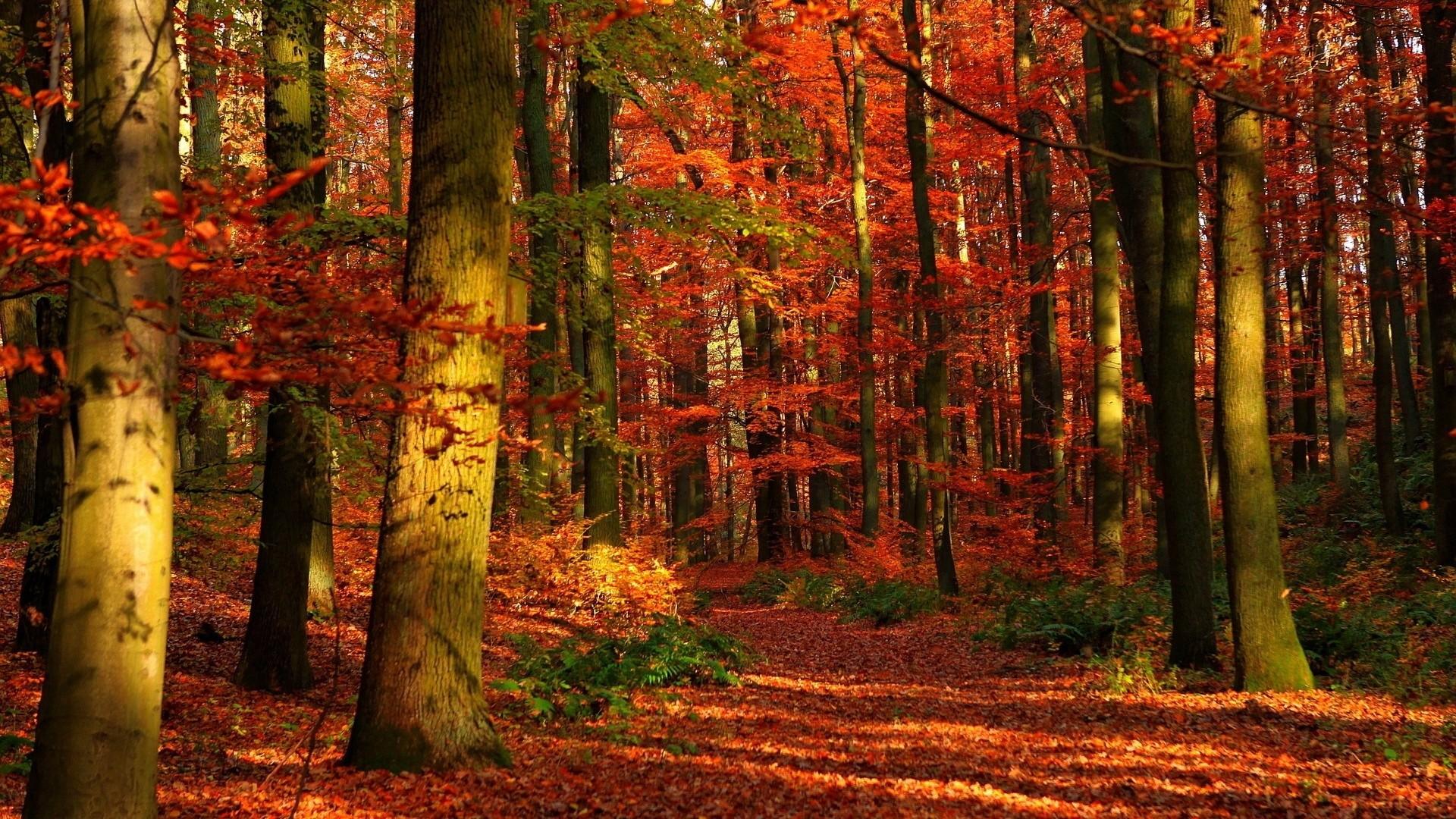 fall pics wallpaper