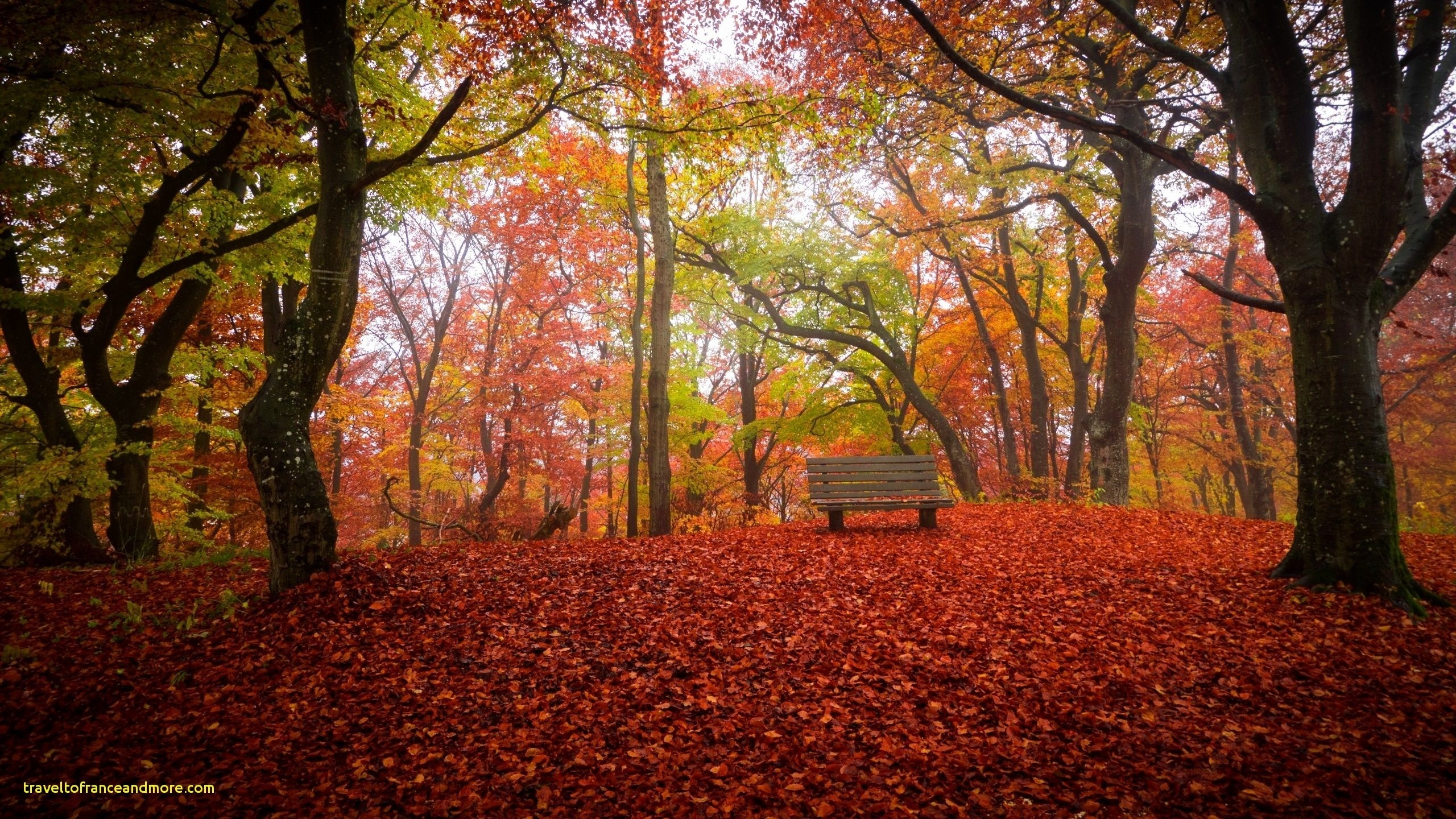 fall leaves background free