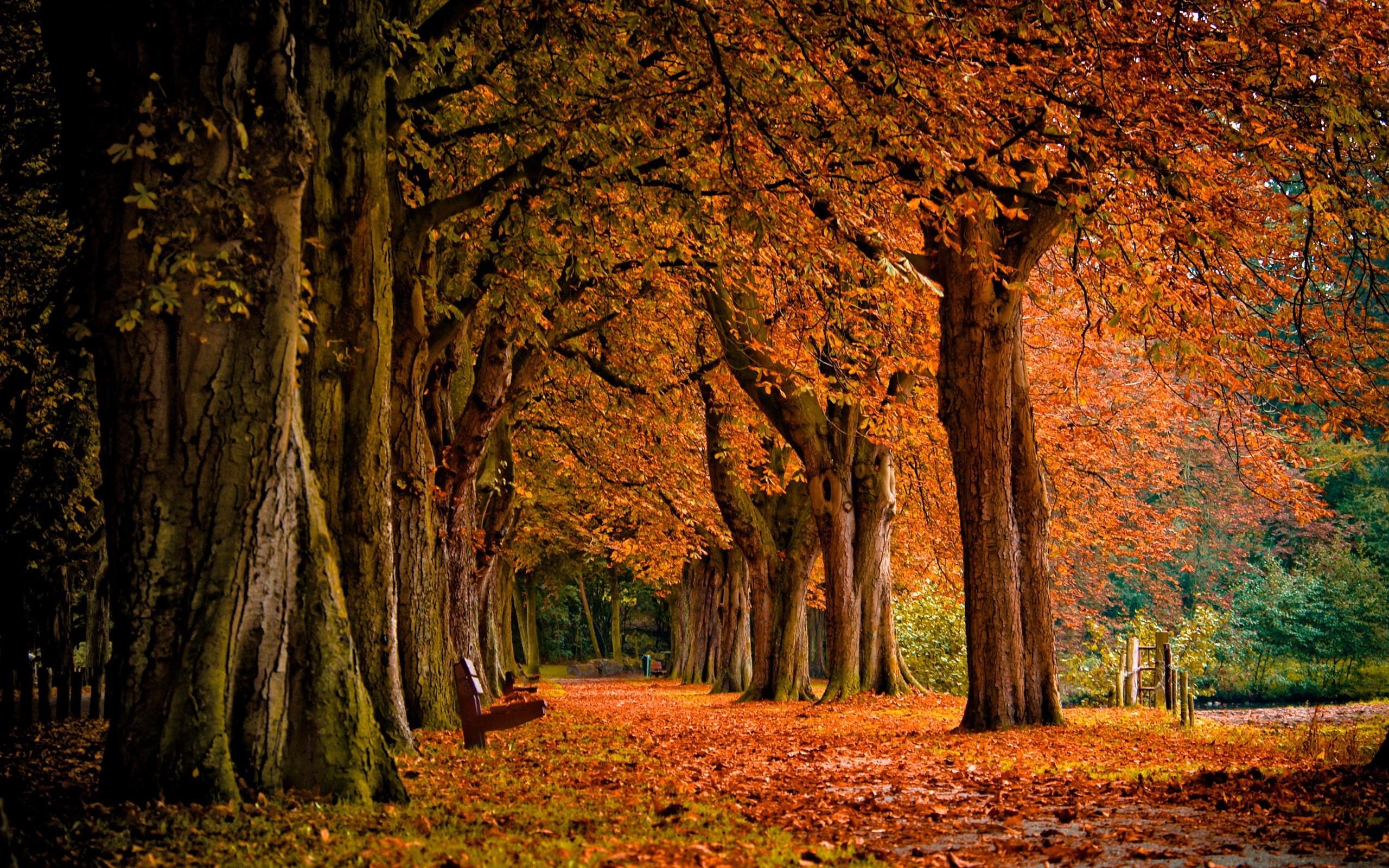 fantasy autumn wallpaper