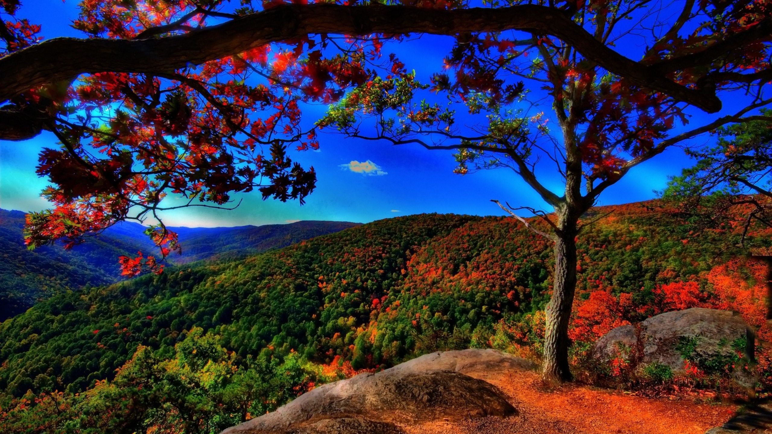 fall leaves background images