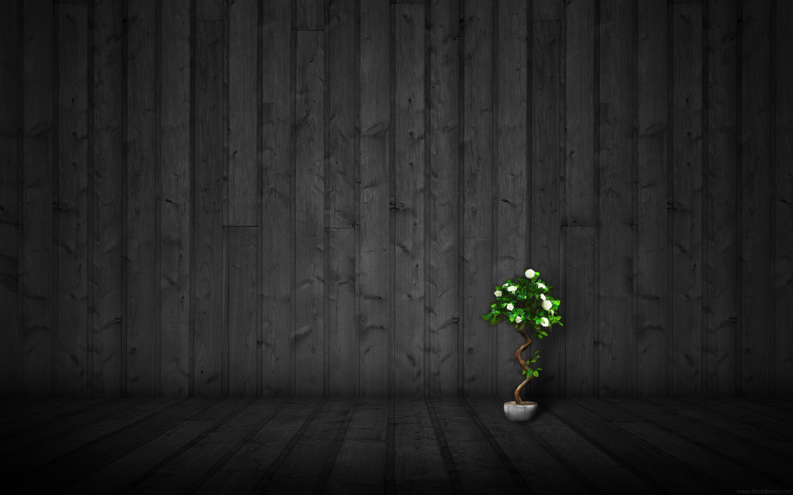 dark nature background, background dark forest