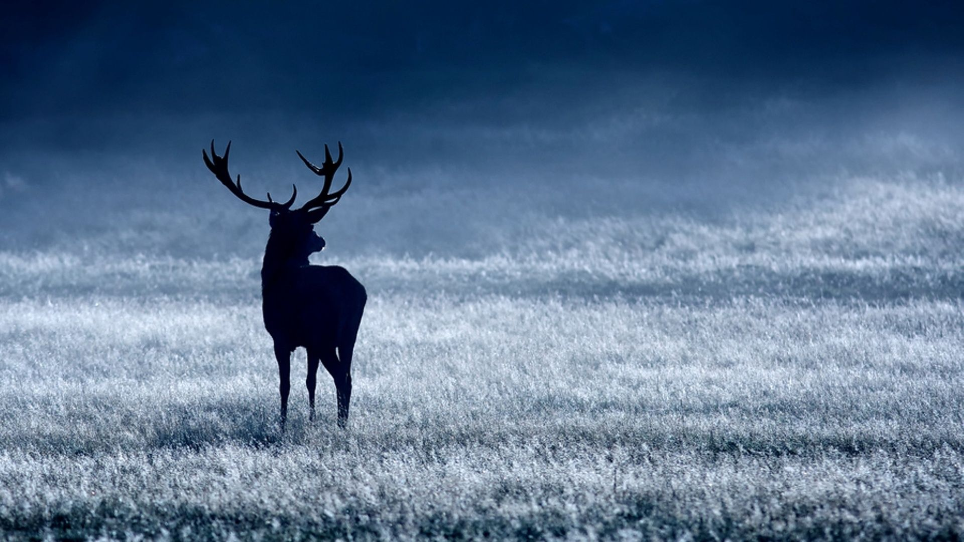 deer wallpaper for free