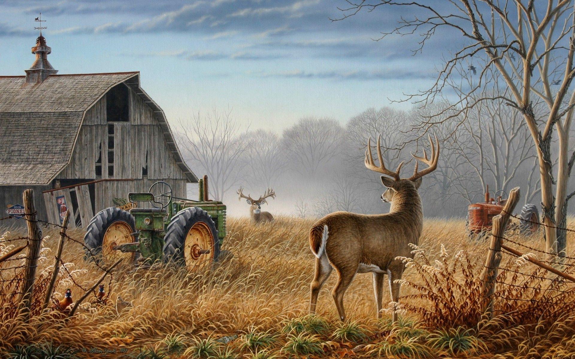 deer backgrounds pictures