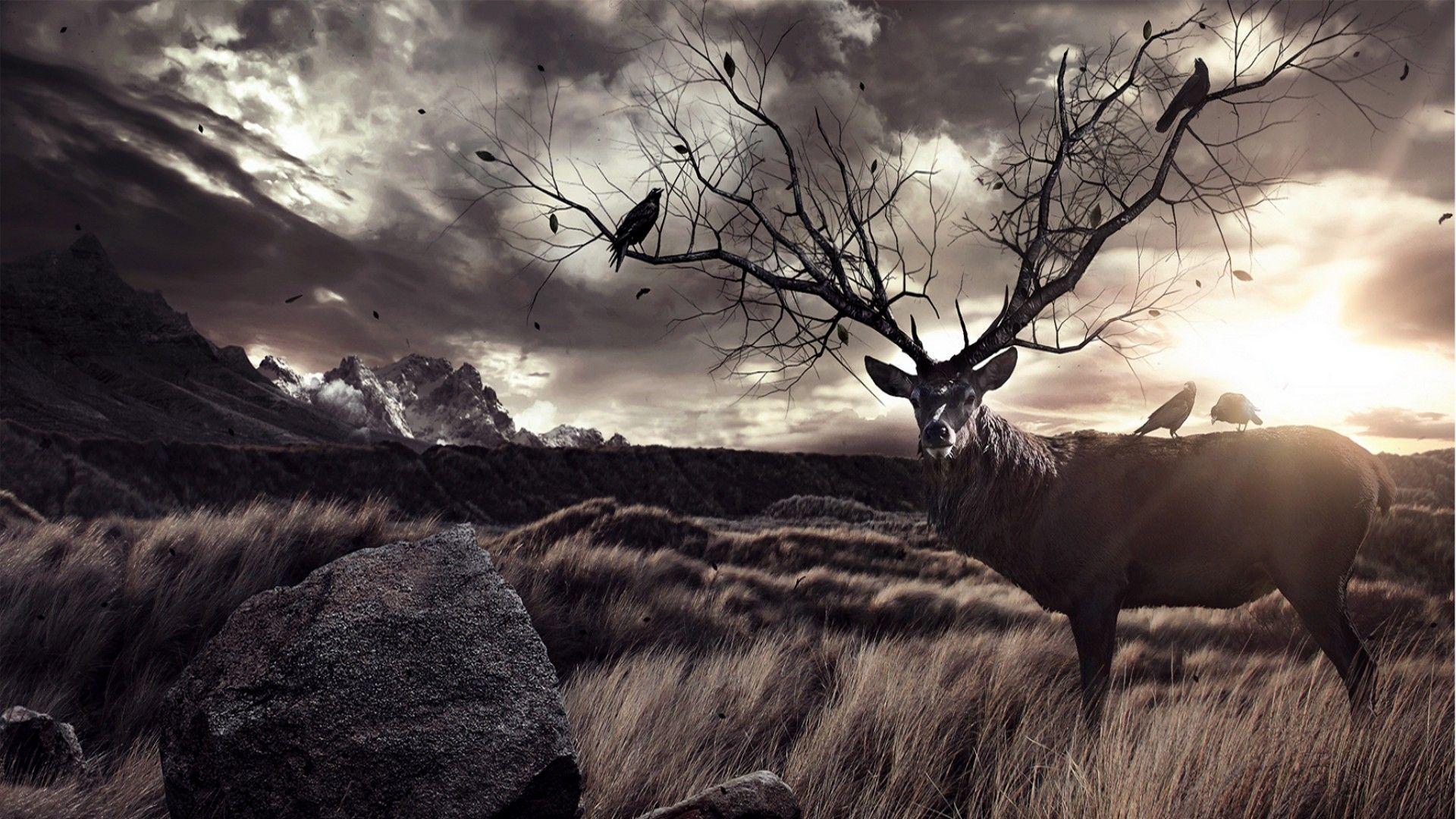 deer backgrounds photos