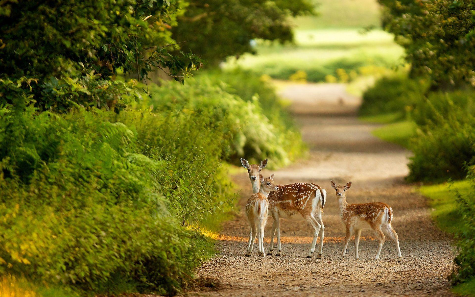 deer images free download