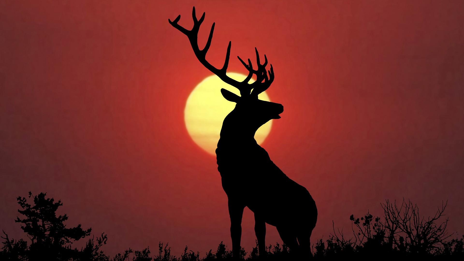 deer wallpaper iphone