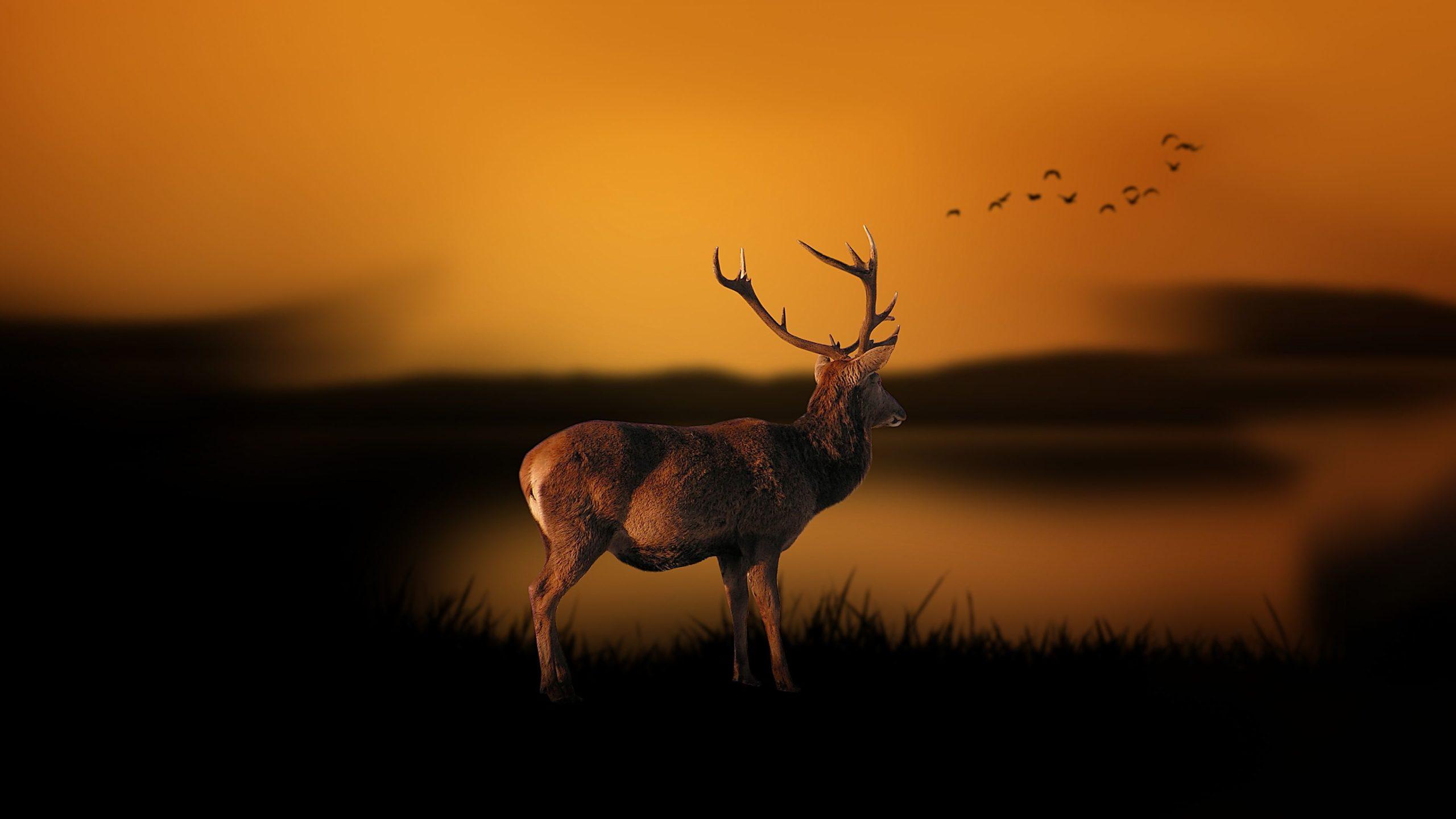 cool deer backgrounds