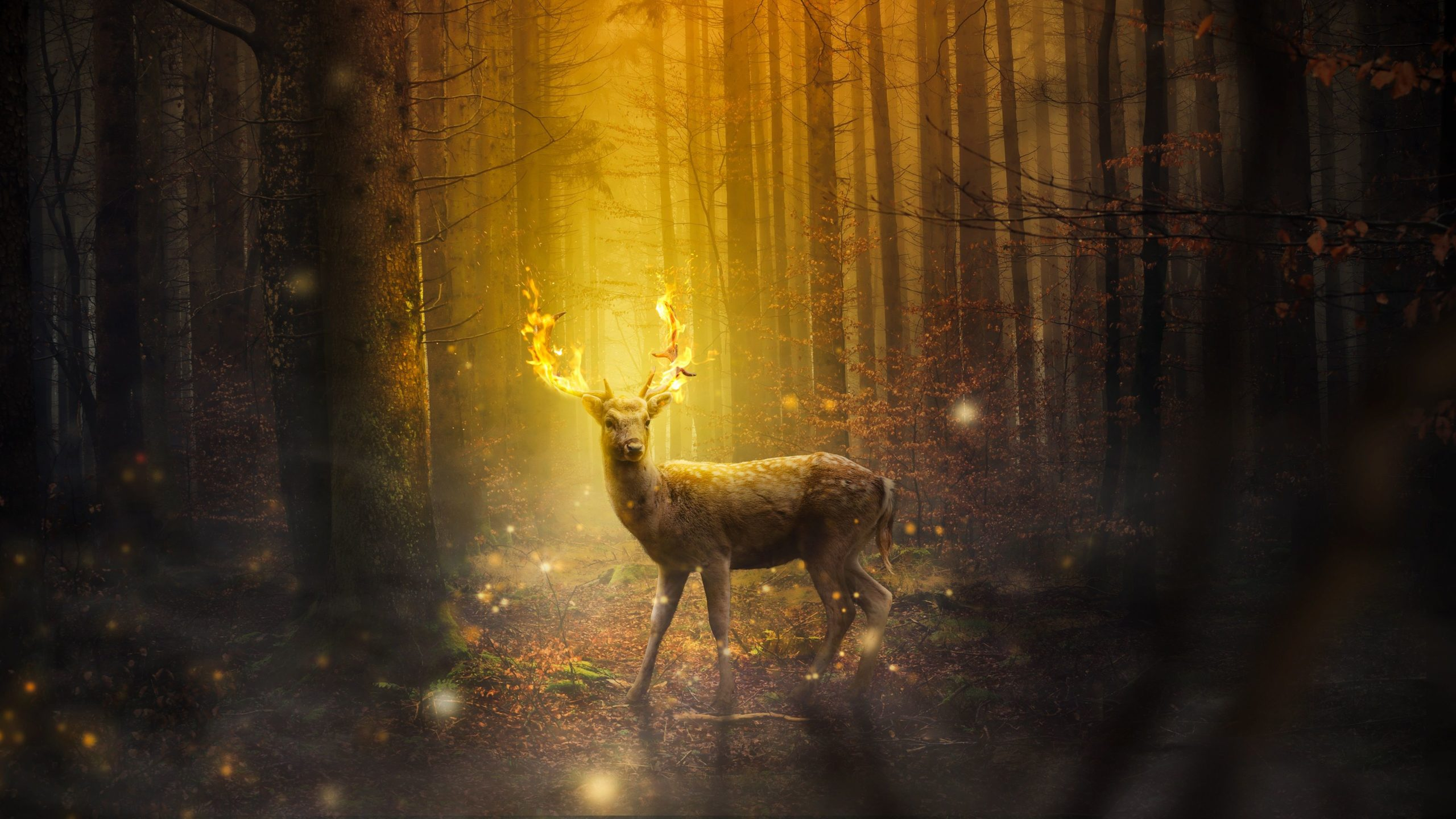 deer desktop wallpapers