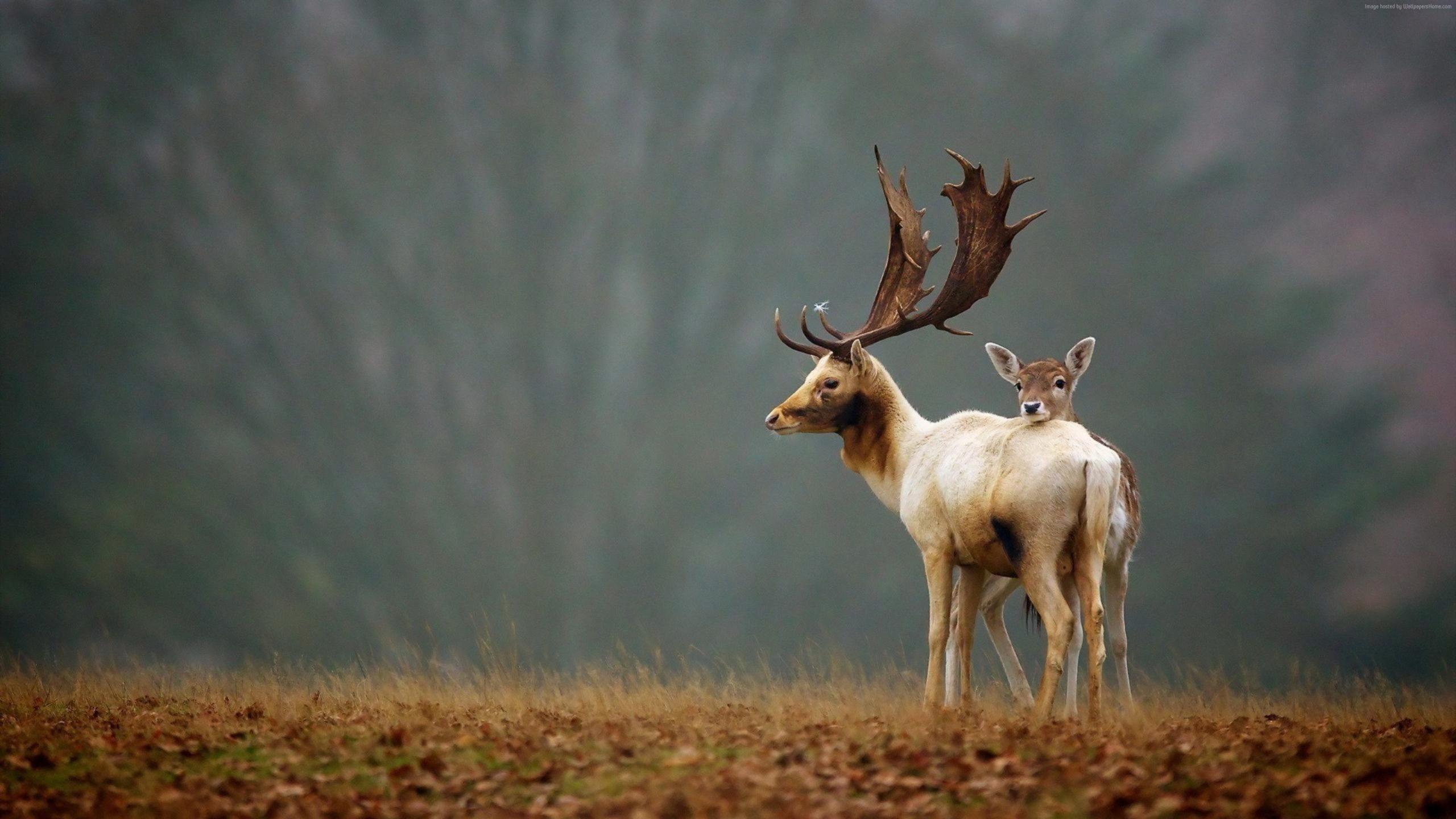 deer head wallpaper