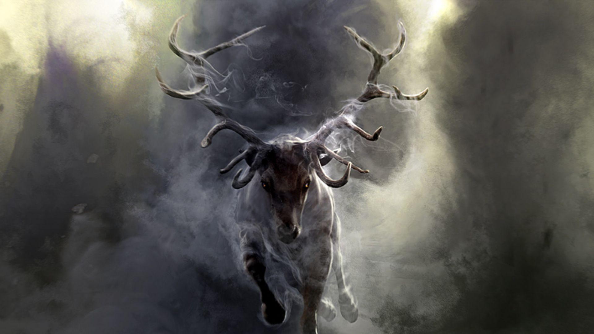 cool deer pics