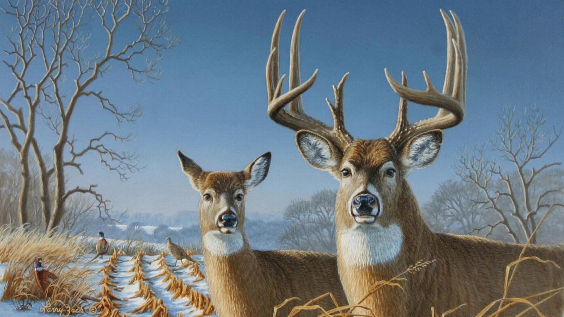 deer photos free download