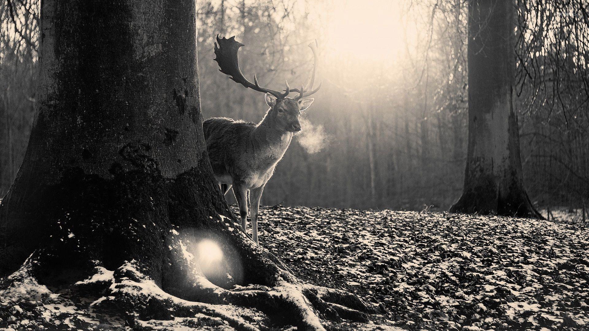 deer art wallpaper