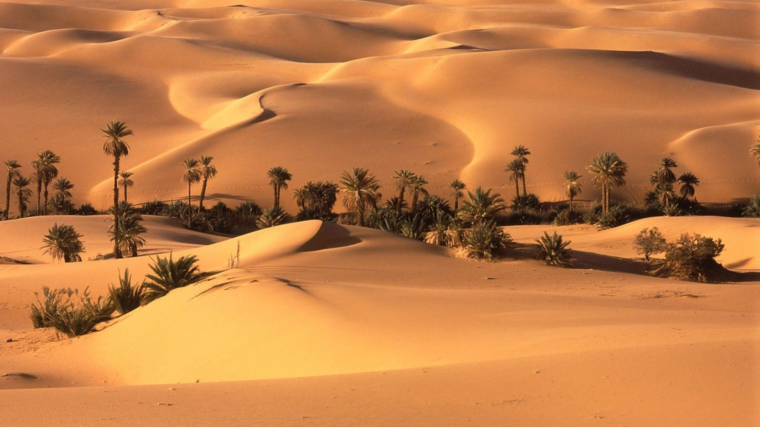 pictures of a deserts