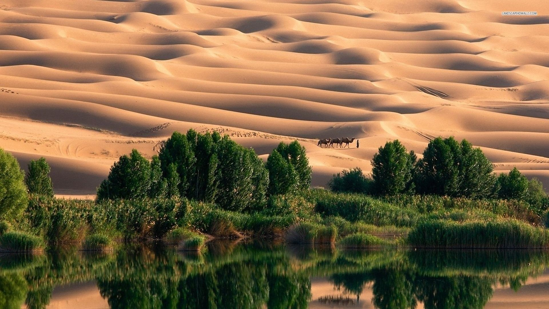 free desert images