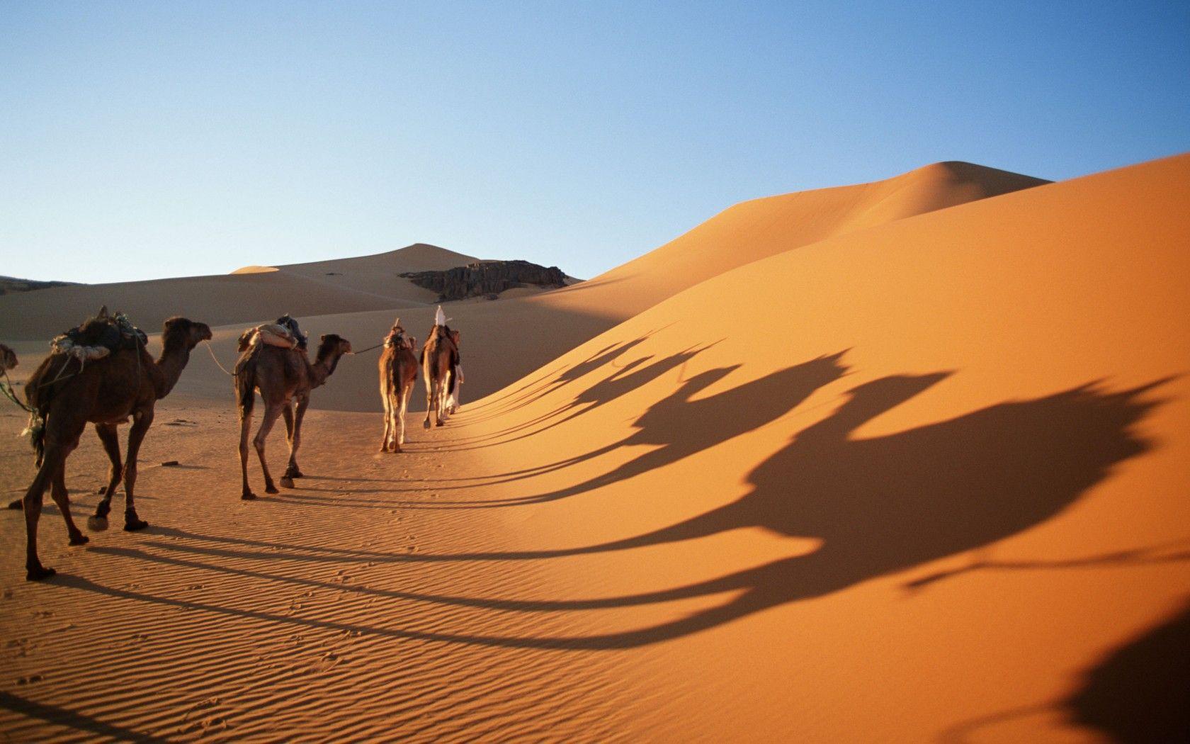 desert ecosystem images