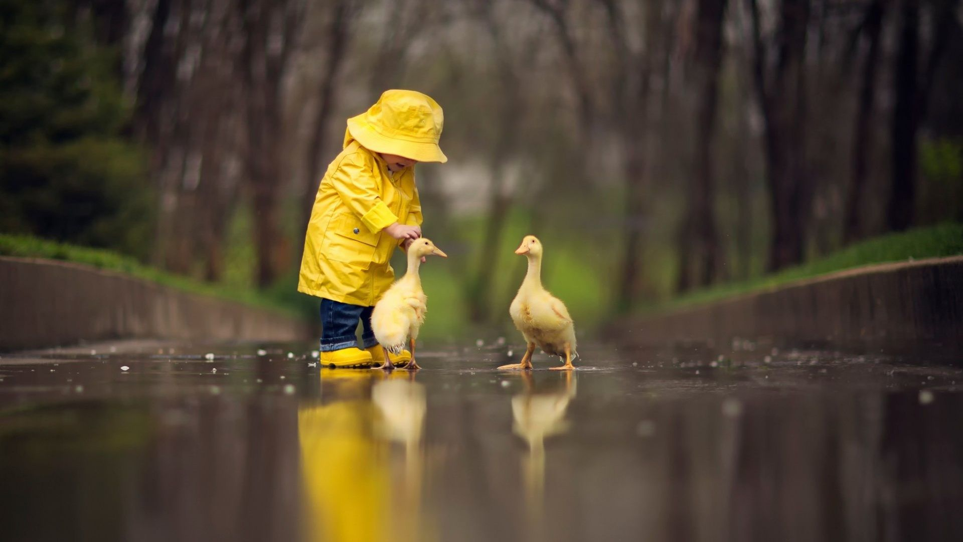 duck image 4k