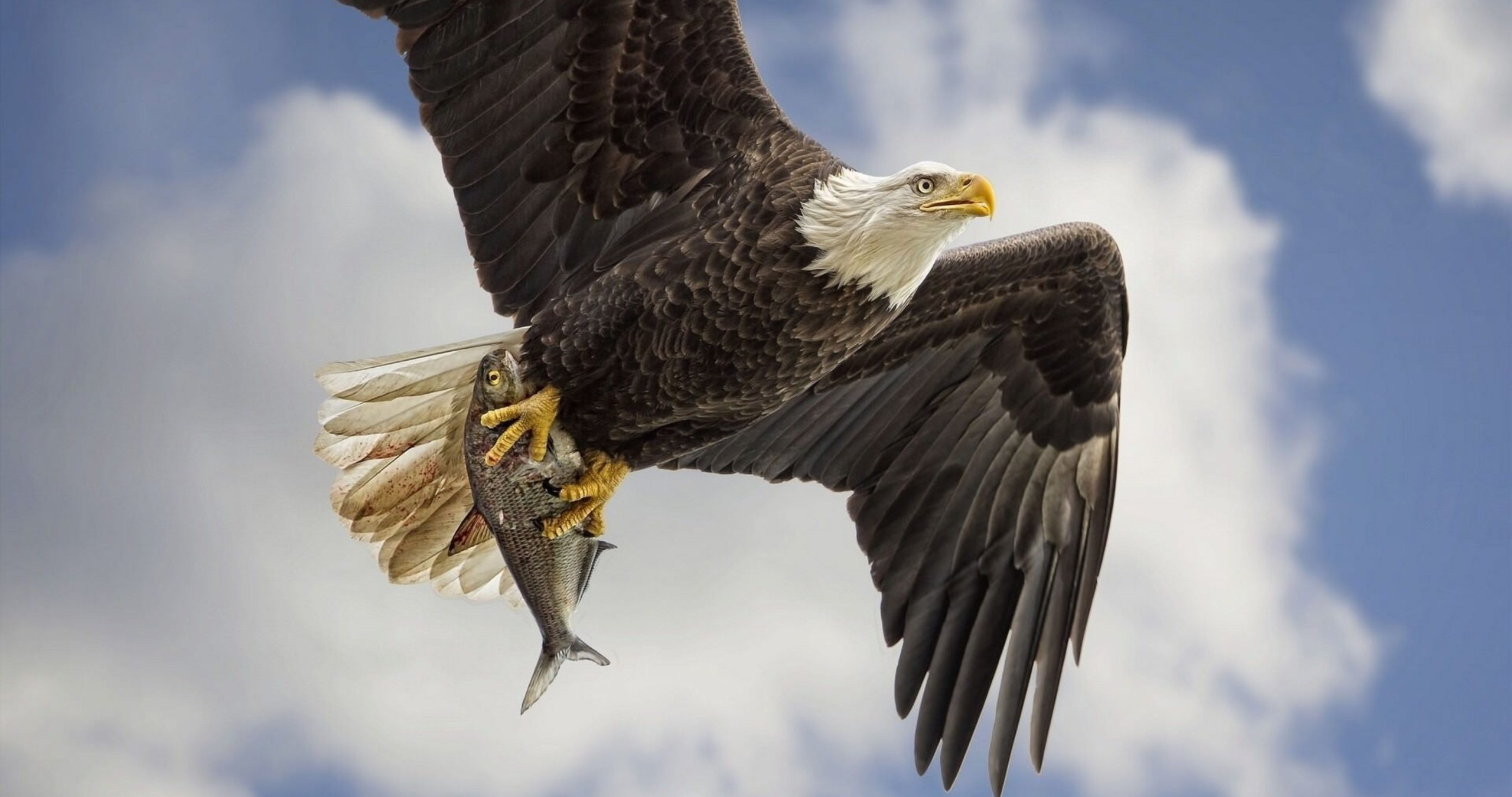 eagles pictures hd