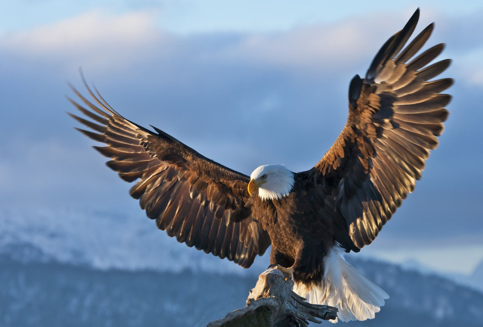 eagle photos gallery
