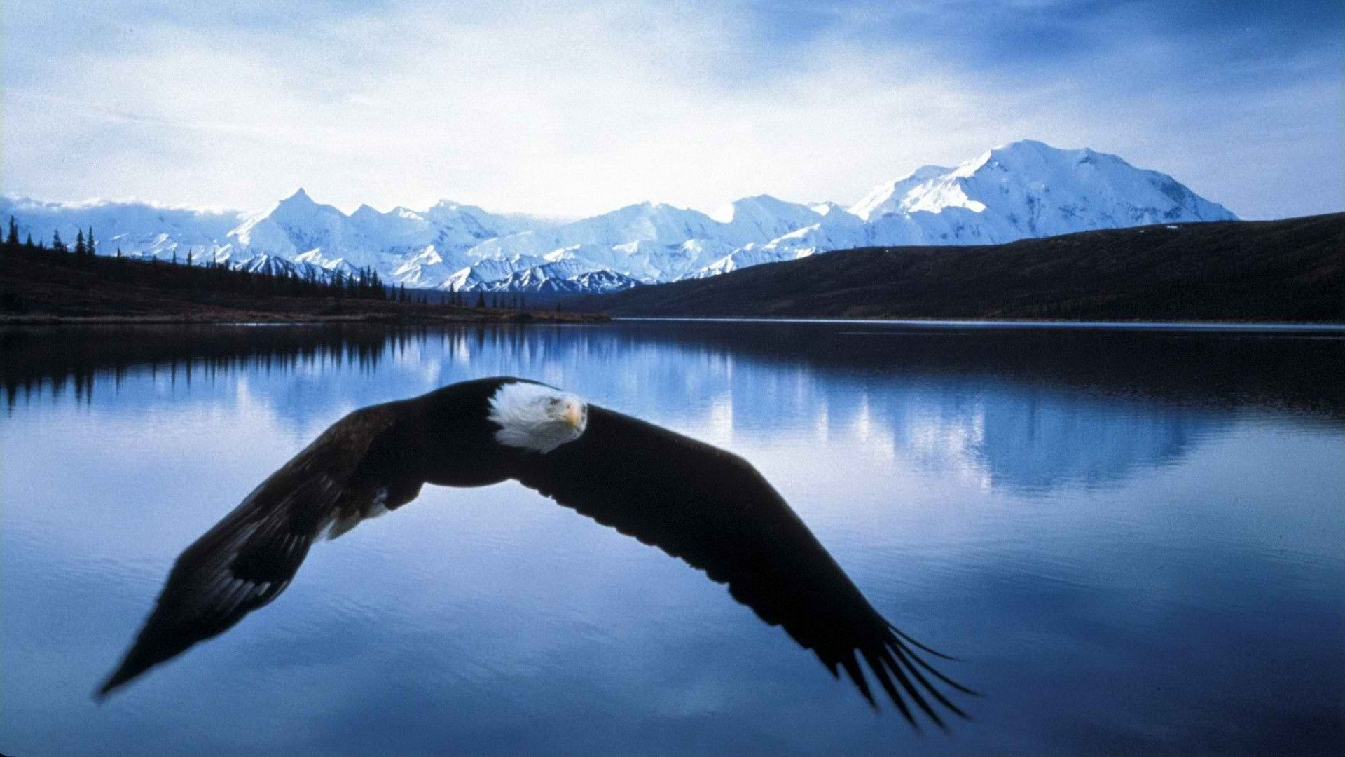 bald eagle images free