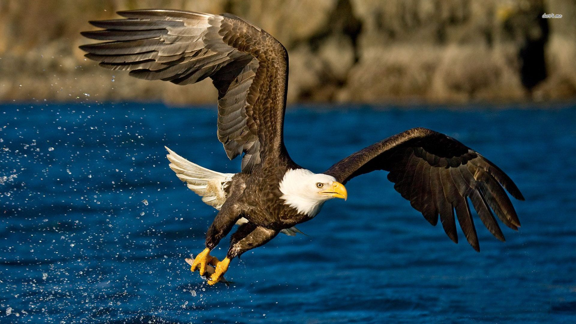 eagles pictures free