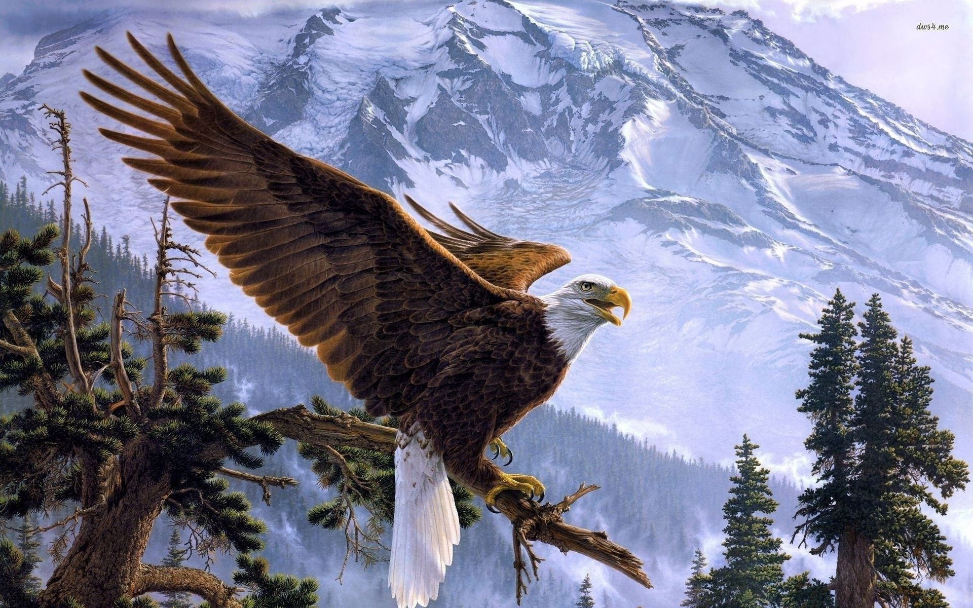 wallpapers eagle hd