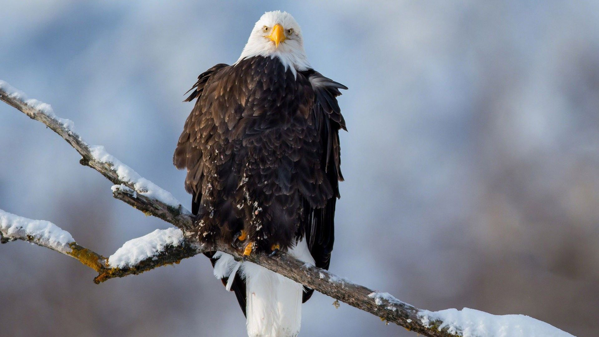 show me a picture of a eagle