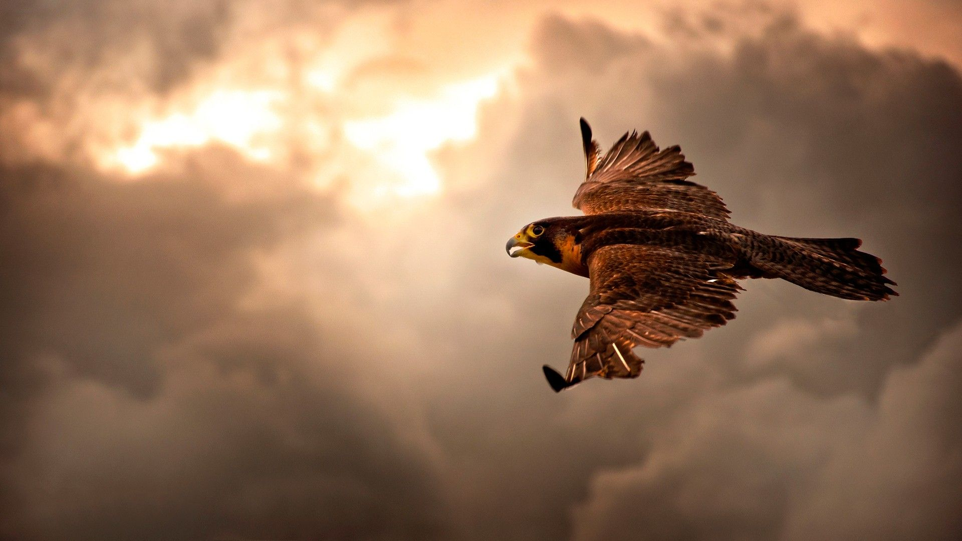 most beautiful eagle pictures