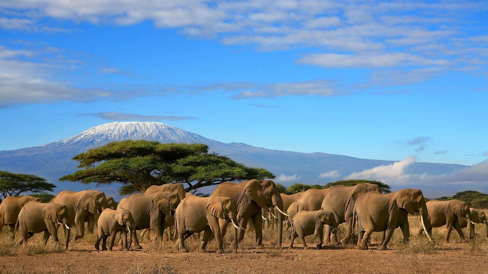 elephant backgrounds