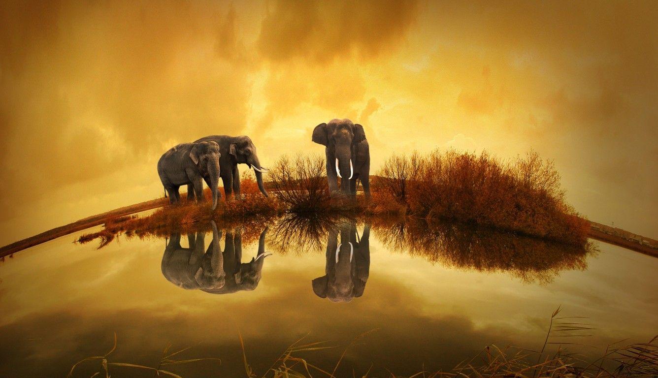 elephant screensavers