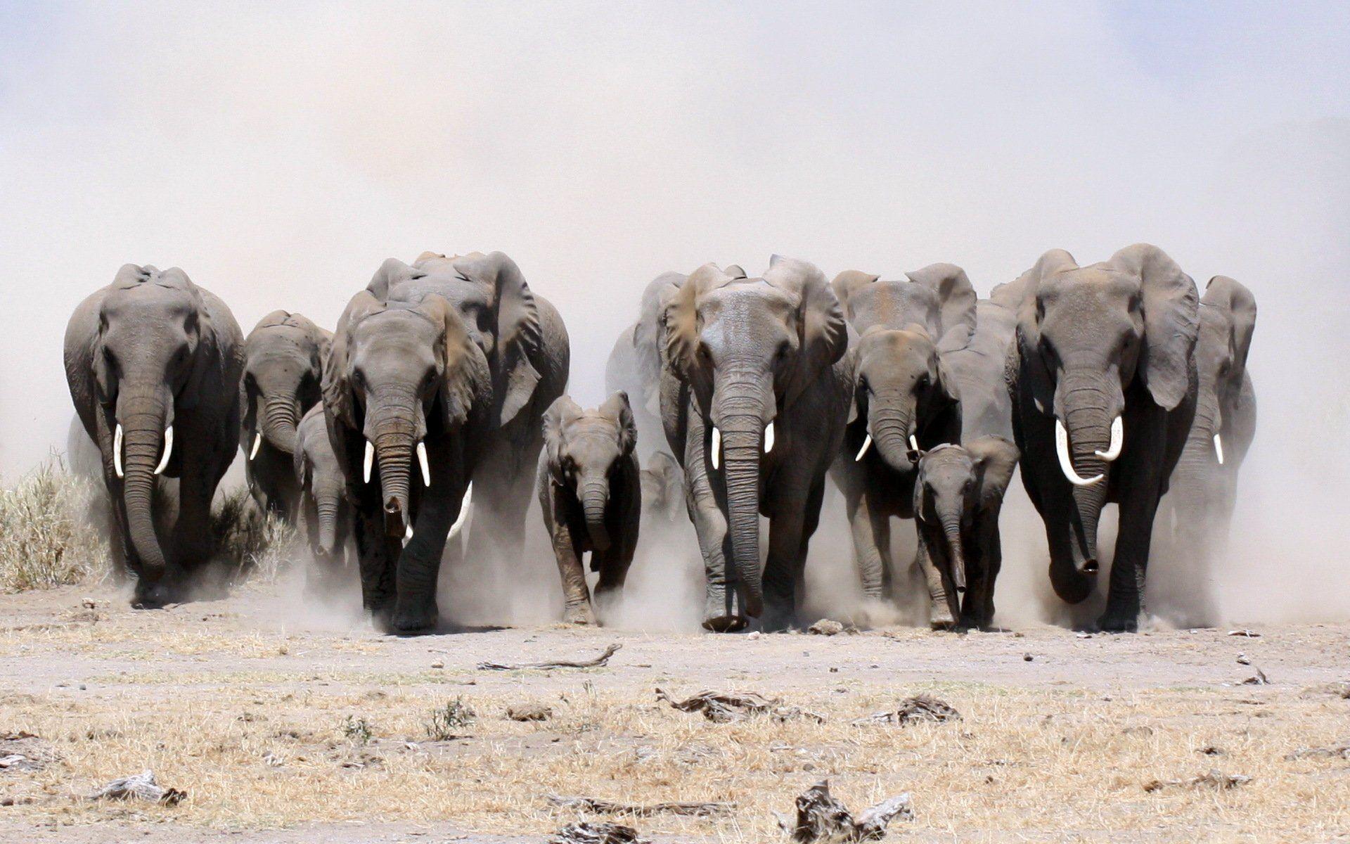elephant backgrounds hd