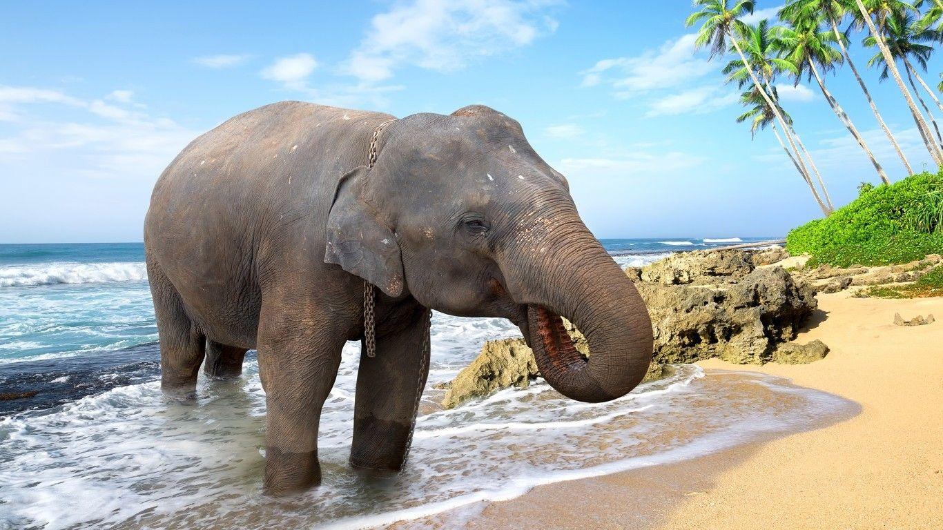 elephant desktop backgrounds