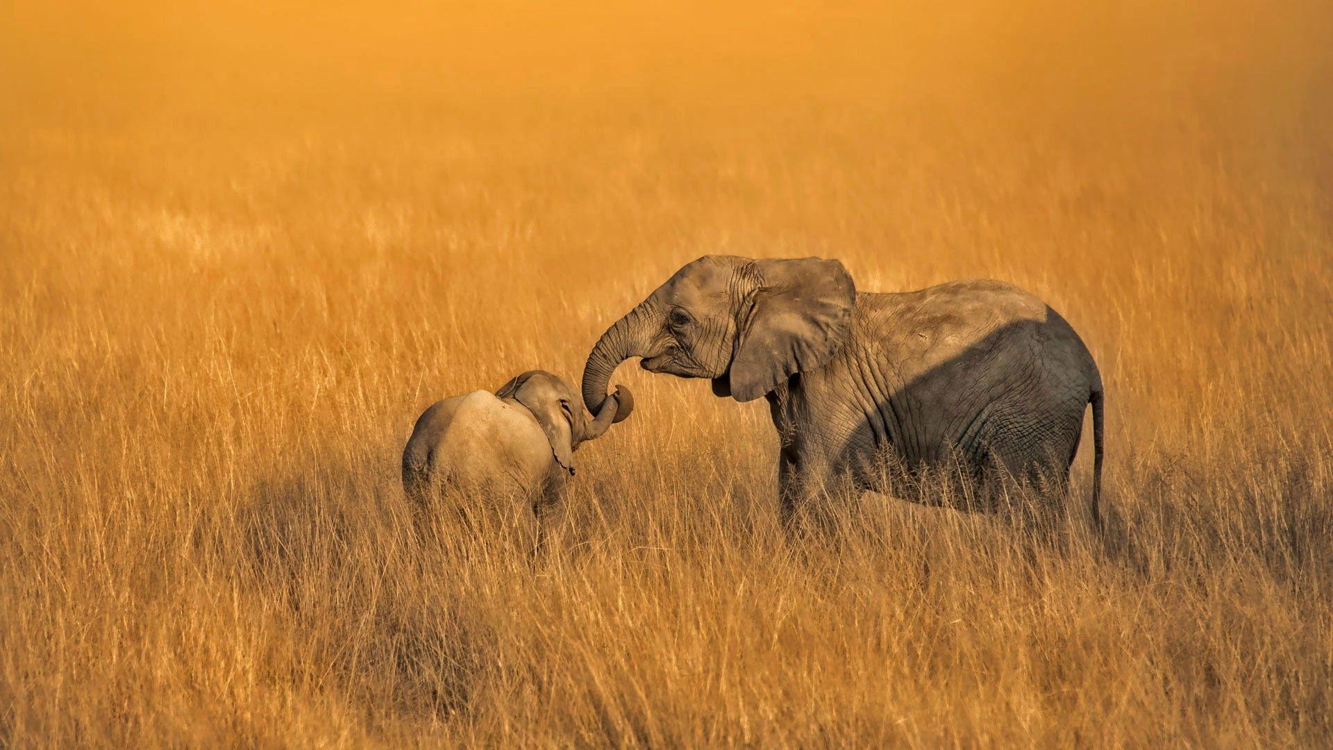 hd elephant wallpapers