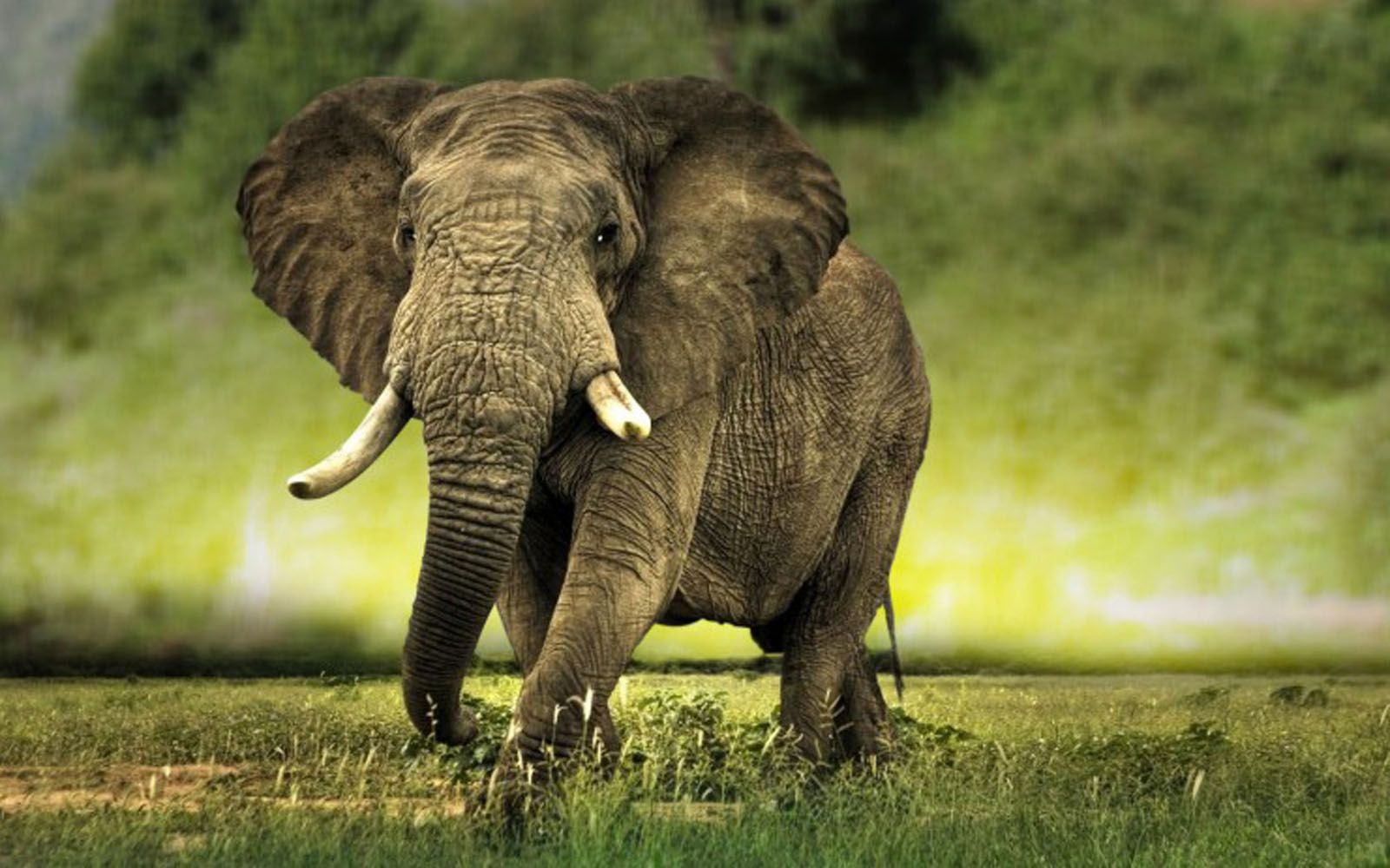 elephants pictures free download