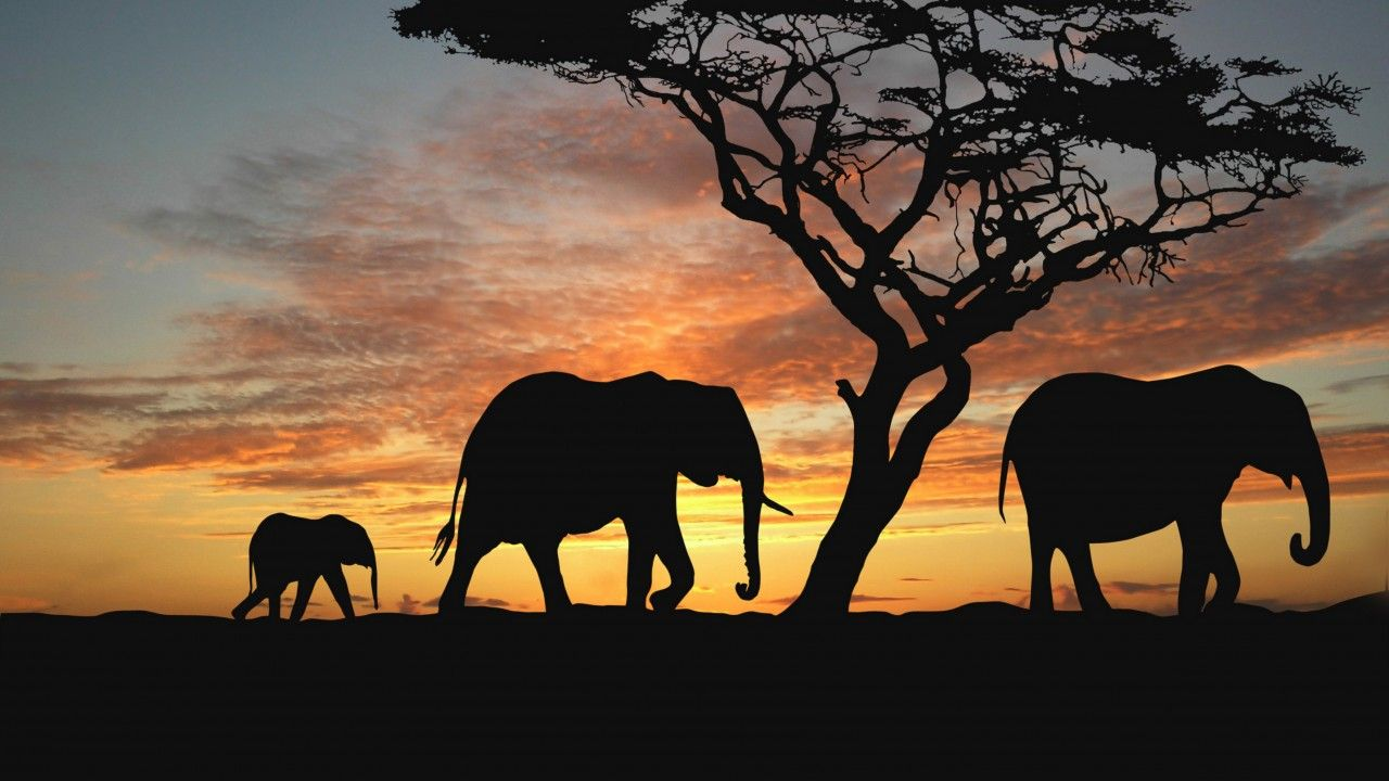 photos of elephant