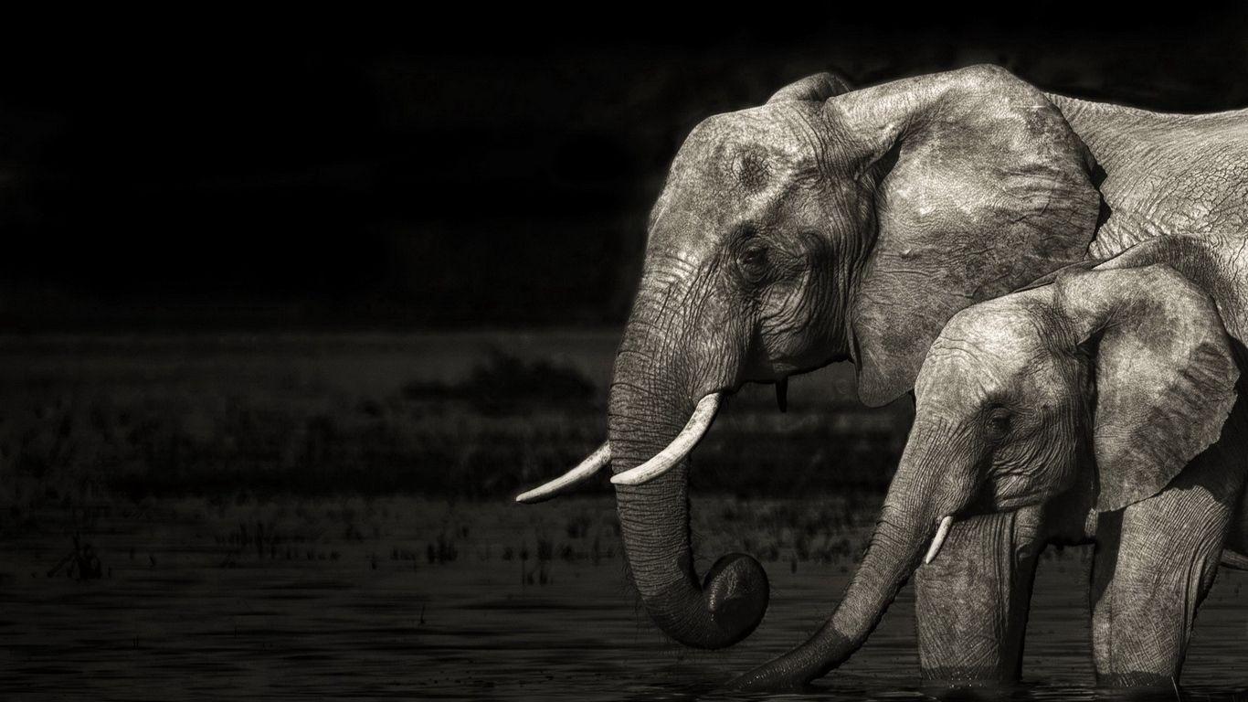 elephant computer backgrounds