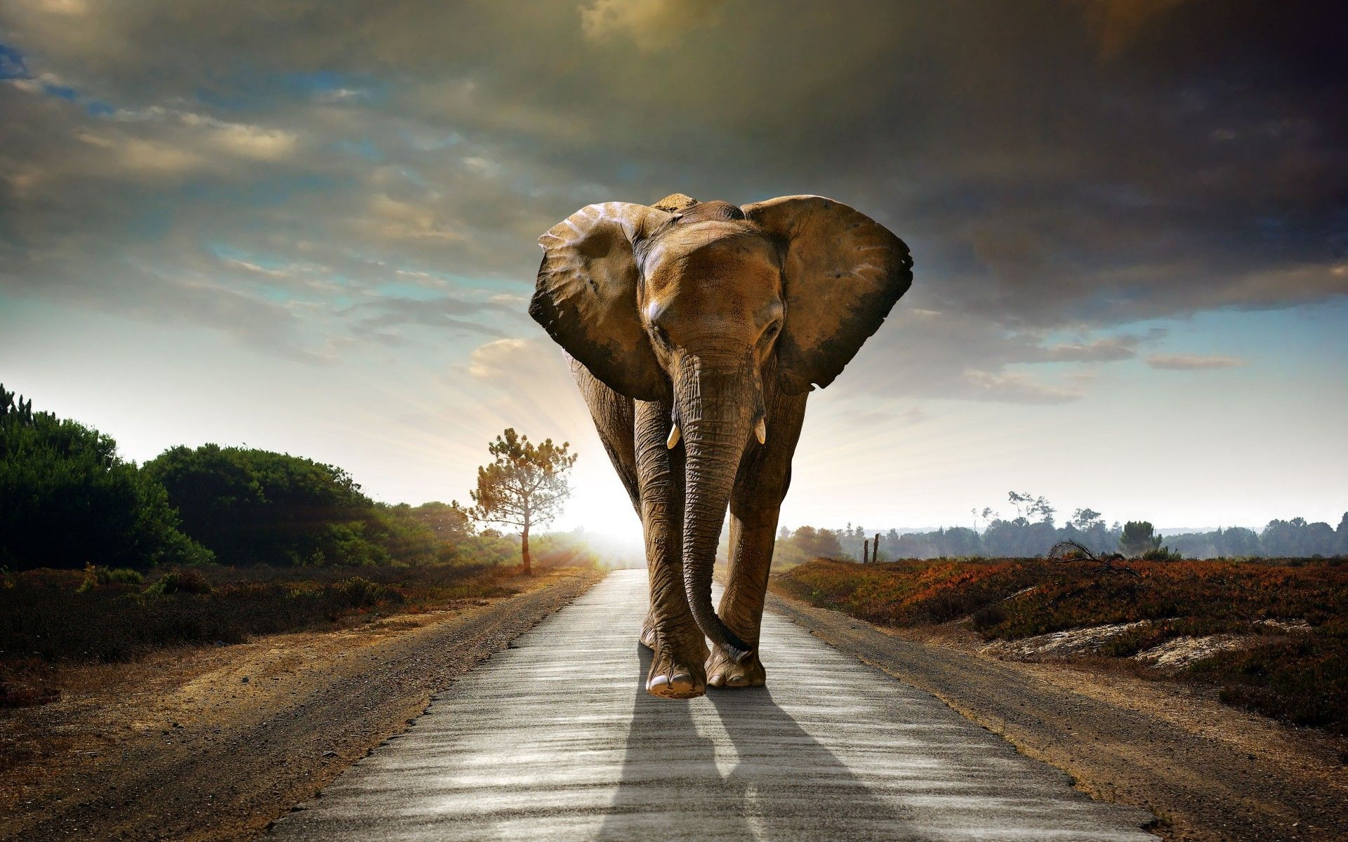 elephant wall paper