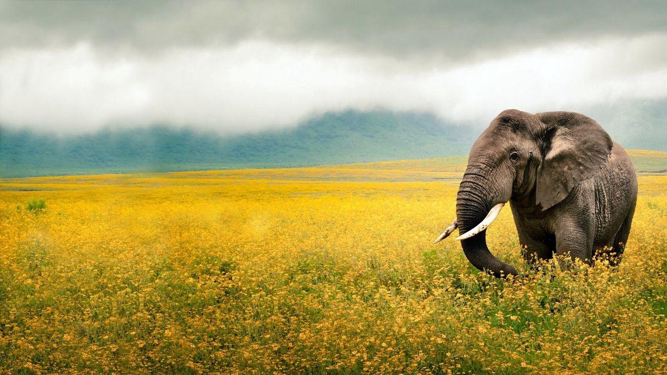 elephant computer background