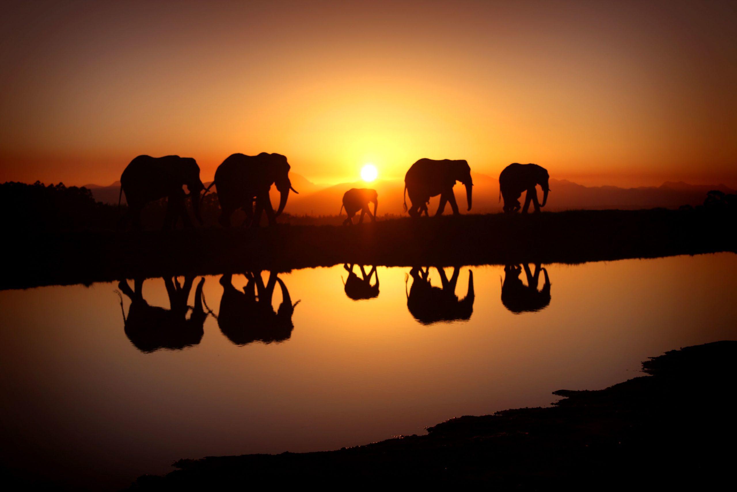 free elephant wallpaper