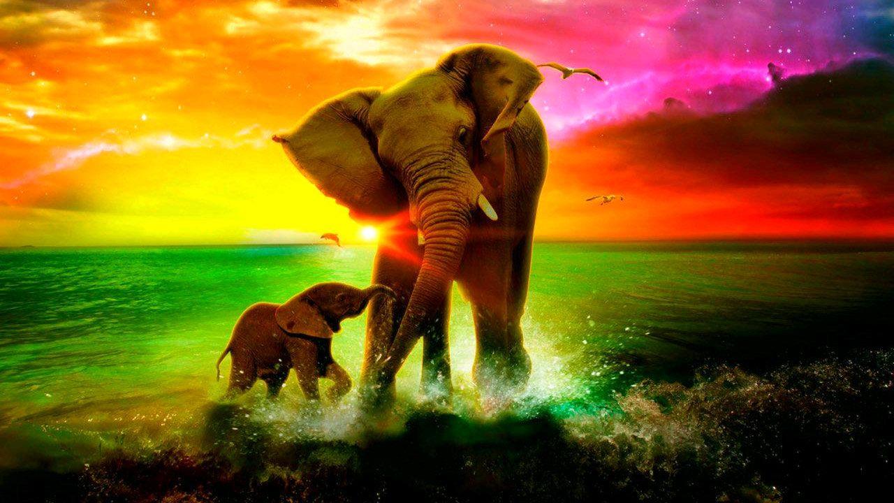 hd elephant wallpaper