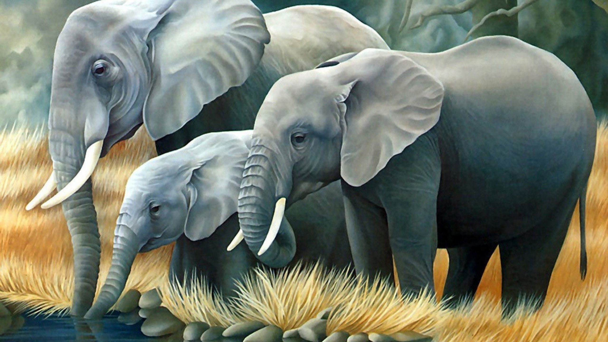 elephant wallpaper for iphone