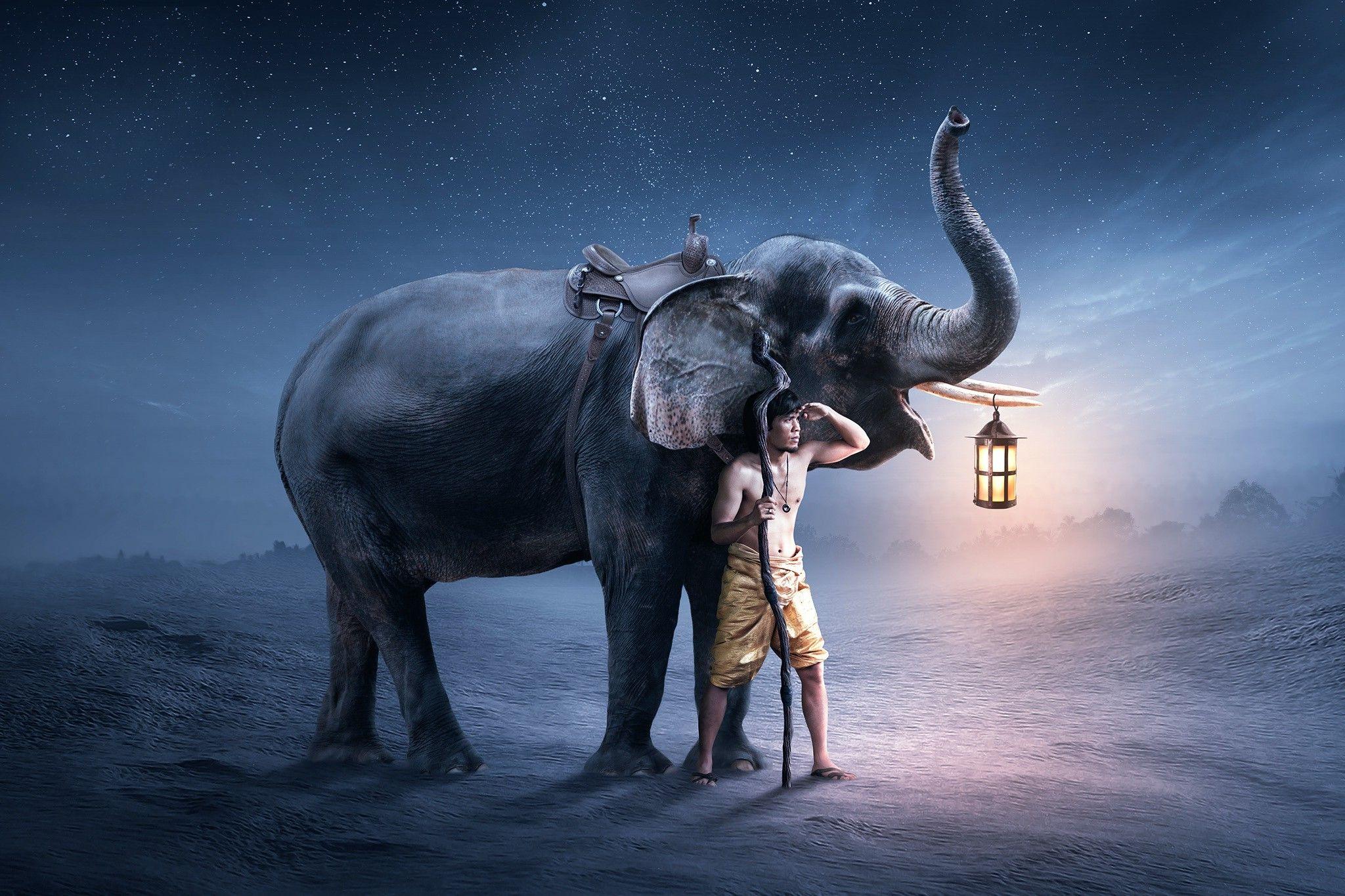 elephant iphone background