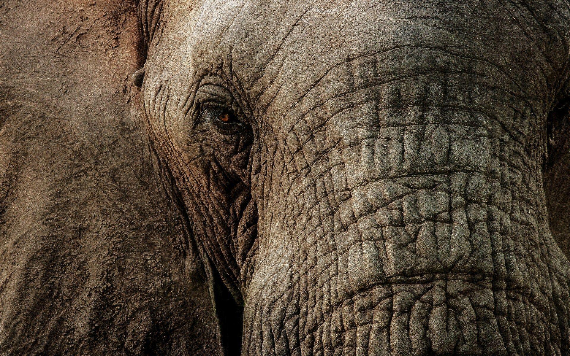 elephant iphone wallpaper